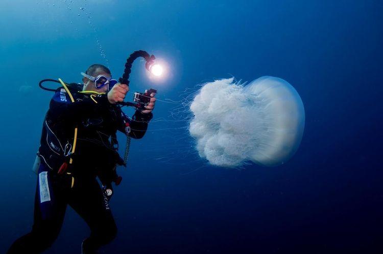 La méduse Rhopilema nomadica. Photo Shevy Rothman