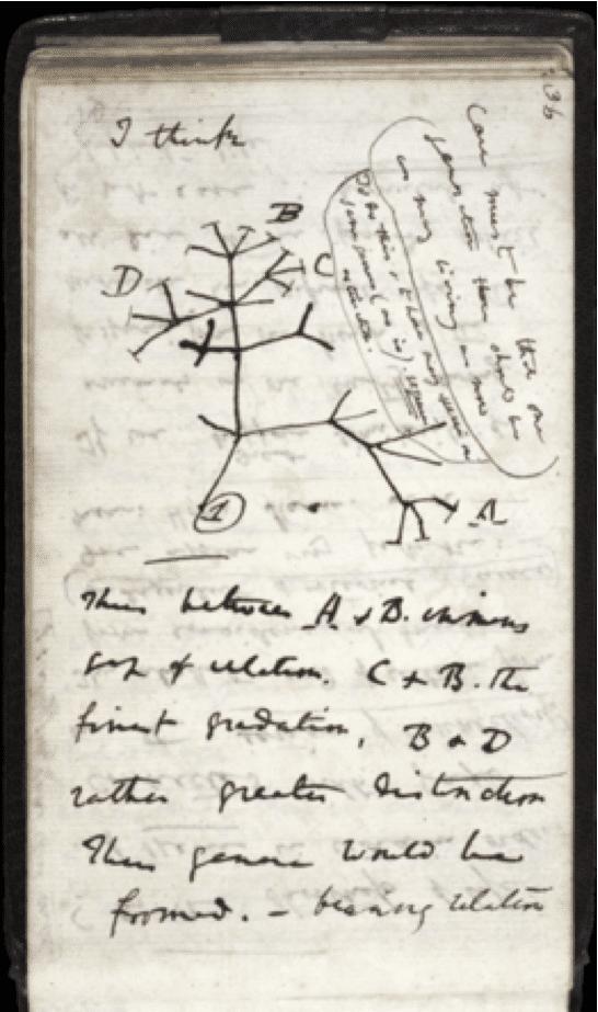 """في منتصف يوليو 1837 بدأ داروين في كتابه للملاحظات """" B """" على تحويل الأنواع، وكتب فوق شجرته التطورية الأولى """" أعتقد """" I thinkفي الصفحة 36"""