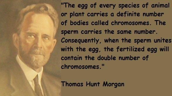 مورغان في 1933 يكتشف أن الجينات هي الأساس الميكانيكي لنقل الصفات الوراثية، تقع في صفوف مرتبة علي الكروموسومات داخل نواة الخلية..!